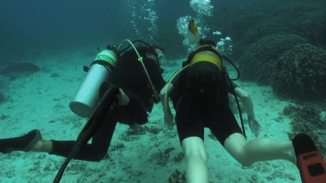 ms, two scuba divers swimming around coral reef, rear view, moorea island, tahiti, french polynesia - insel tahiti stock-videos und b-roll-filmmaterial