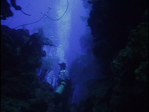 two scuba divers underwater - unknown gender stock videos & royalty-free footage