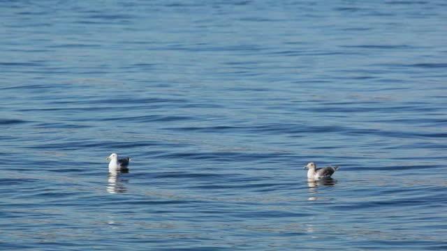 ws two seagulls floating on elliott bay, seattle, washington, usa - elliott bay bildbanksvideor och videomaterial från bakom kulisserna