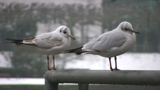 two seagulls (hd) - two animals stock videos & royalty-free footage