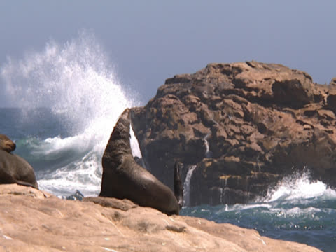 two seals sit basking in bright sunshine while waves crash beyond. in the distance, another rock is also pummelled by the waves. durban, south africa. - durban stock videos and b-roll footage
