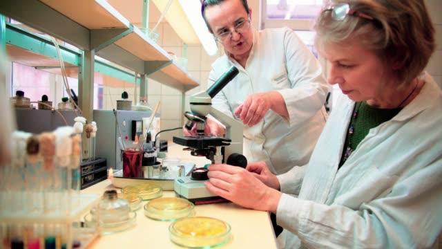 vídeos de stock, filmes e b-roll de dois sênior 50 anos de idade mulheres, cientistas, trabalhando em conjunto com o microscópio e bacteriana cultura no laboratório de microbiologia da faculdade - condição médica