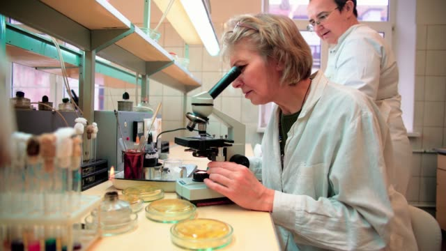 two senior 50-years-old women, scientists, working together with the microscope and bacterial culture in the college microbiology lab - biologist stock videos & royalty-free footage