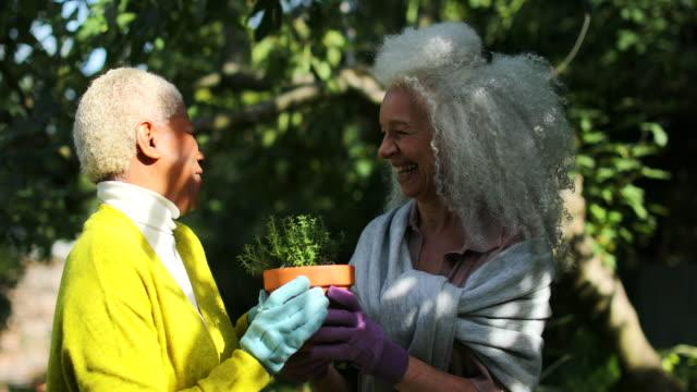 vídeos de stock e filmes b-roll de two senior female friends potting plants and talking in garden at home - colocar planta em vaso