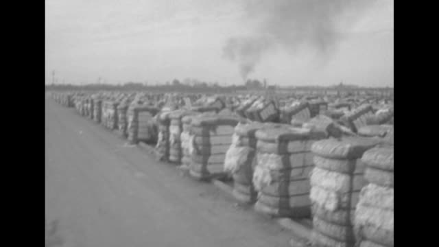 vidéos et rushes de two shots from moving vehicle of row after row of cotton bales ready for shipping / note exact month/day not known - fresno
