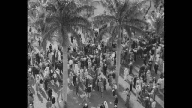 two shots of flamingoes in water next to racecourse / crowd in stands / overhead shot of racehorses being led around paddock overhead shot of crowd... - hialeah stock videos & royalty-free footage