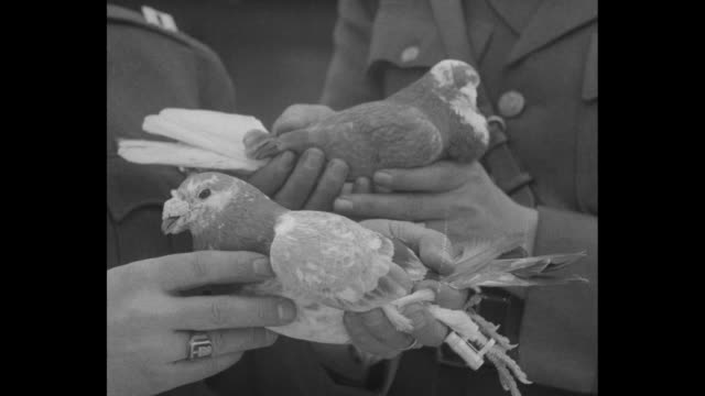 vídeos y material grabado en eventos de stock de two shots of pigeons in cages / two officers standing in front of cages holding pigeons one officer talking to camera / close shot of officers' hands... - iglesia conmemorativa del emperador guillermo