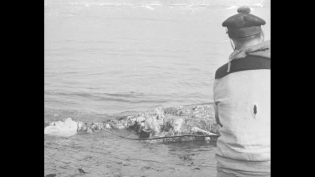 vidéos et rushes de two shots of two men standing on shore pulling in creature / crowd of people standing on shore looking at creature / shot from behind of man using... - colonne vertébrale humaine