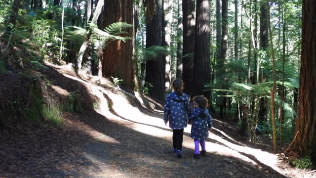 two sisters travel and hikes in giant redwoods forest - セコイア点の映像素材/bロール