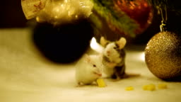 Two small mice eat cheese and wash. The year of the rat on the Eastern calendar.