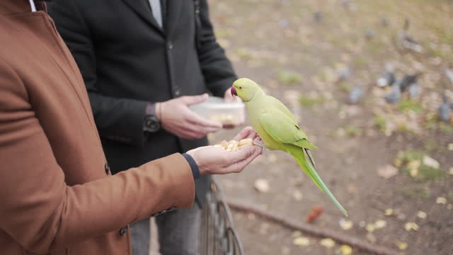 two smartly dressed men feeding parrots in the park - beak stock videos & royalty-free footage