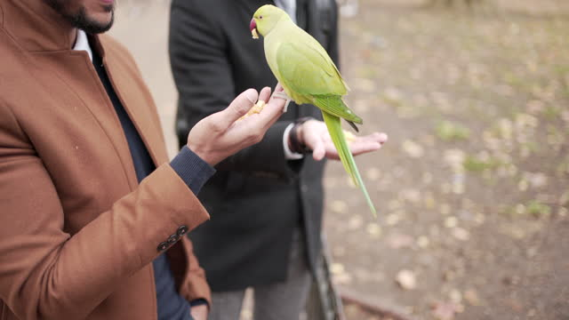 two smartly dressed men feeding parrots in the park - animal mouth stock videos & royalty-free footage