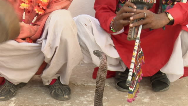 cu zo tu ms two snake charmers playing instruments / pushkar, rajasthan, india - gourd stock videos & royalty-free footage