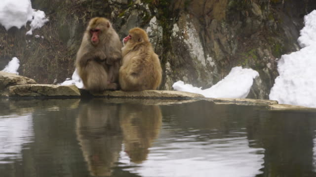 two snow monkeys sit down side-by-side and embrace and groom each other around the edge of hot spring bathtub among the snowy mountain in jigokudani snow monkey park (jigokudani-yaenkoen) at nagano japan on feb. 19 2019. - taking a bath stock videos & royalty-free footage