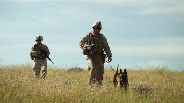 WS Two soldiers and dog walking towards AUDIO / Camp Pendleton, CA, United States
