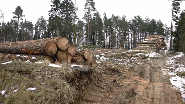 two stacked piles of log or lumber during deforestation in forest - destruction stock videos & royalty-free footage