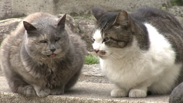 two stray cats, tokyo, japan - stray animal stock videos & royalty-free footage