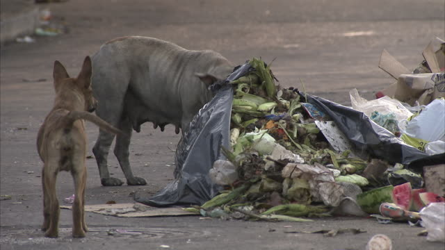 cu two stray dogs rummaging in garbage pile on street / caracas, miranda, venezuela - stray animal stock videos & royalty-free footage