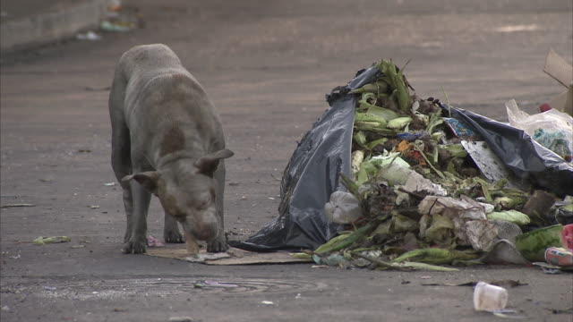 ms zo ws two stray dogs rummaging in garbage pile on street / caracas, miranda, venezuela - venezuela stock videos & royalty-free footage