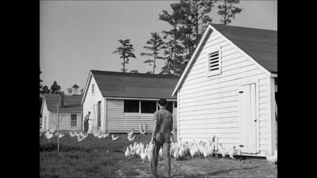 stockvideo's en b-roll-footage met two students walking on road farms bg ws student w/ chicken poultry by hen house int ms male marking eggs ws barn cows int vs students feeding cows... - 1930 1939