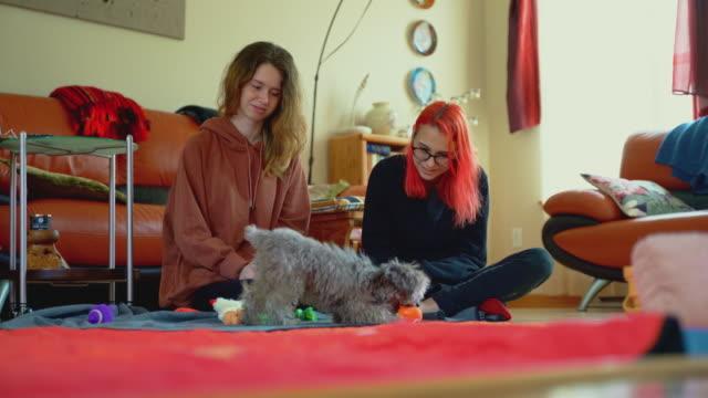 vidéos et rushes de deux adolescentes jouant avec un crabot de chiot dans un salon - adoption