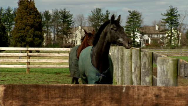 HD WS Two thoroughbred horses wearing blankets walking down along fencing to corner sorrel following black MS Black horse w/ white dappling on face...