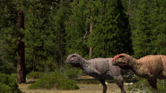 CGI, MS, Two Tyrannosaurus rexes walking in forest