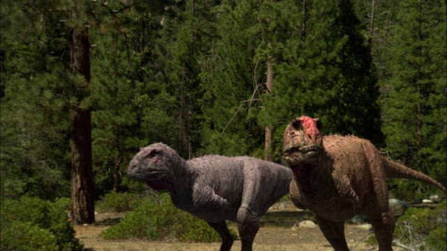 CGI, MS, CU, Two Tyrannosaurus rexes walking in forest
