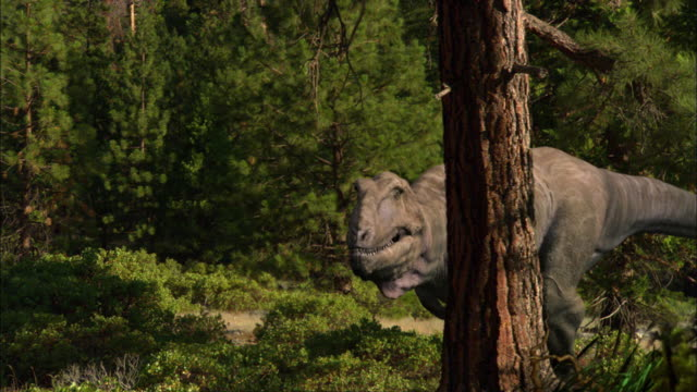 cgi, cu, two tyrannosaurus rexes walking in forest - paleozoology stock videos and b-roll footage
