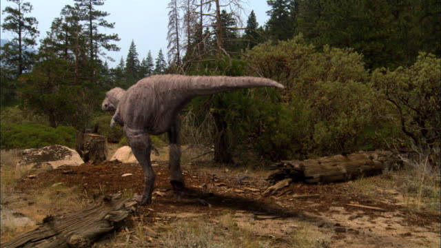cgi, ms, pan, two tyrannosaurus rexes with babies in clearing - paleozoology stock videos and b-roll footage