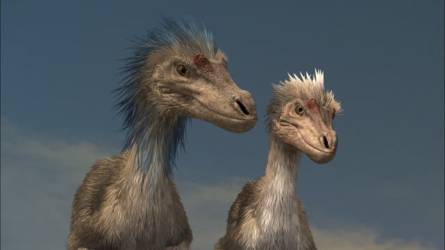 cgi, cu, two velociraptors standing side by side - paleozoology stock videos and b-roll footage