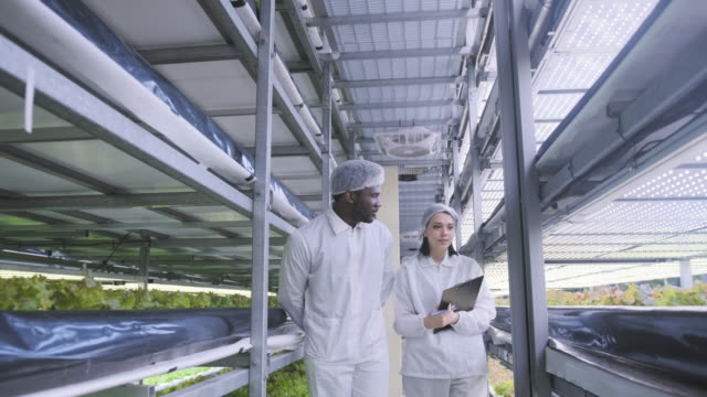 two vertical farm workers checking progress of led lit lettuce - farm to table stock videos & royalty-free footage