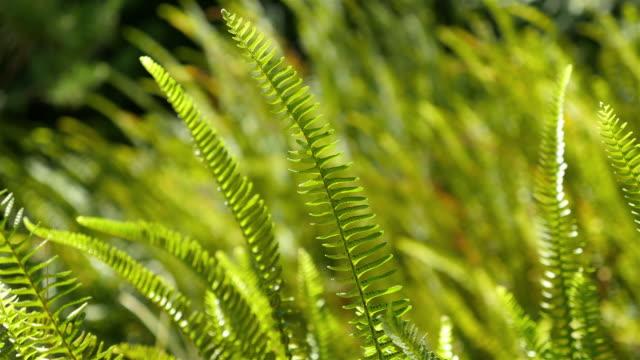 two videos of fern in 4k - bush stock videos & royalty-free footage