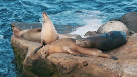 two videos of group of seals in 4k - grey seal stock videos & royalty-free footage