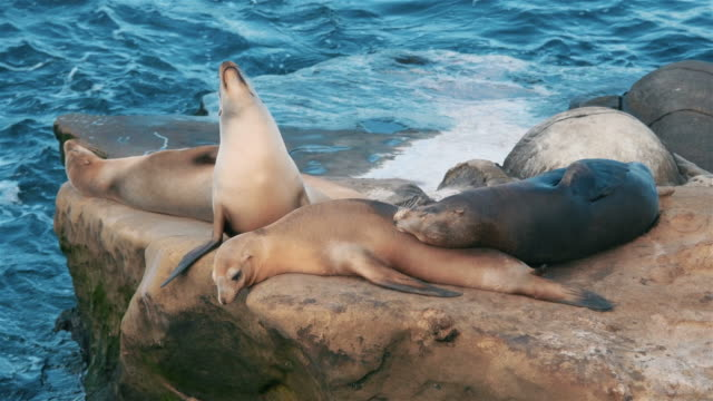 two videos of group of seals in 4k - seals stock videos and b-roll footage