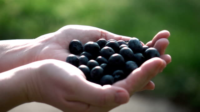 Two videos of hands holding blueberries in real slow motion
