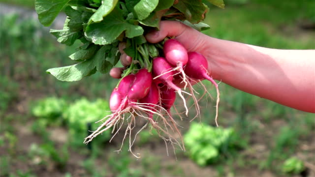Two videos of hands holding radish in real slow motion