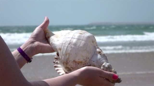 vídeos y material grabado en eventos de stock de dos videos de manos sosteniendo concha por el movimiento lento de océano - concha parte del cuerpo animal