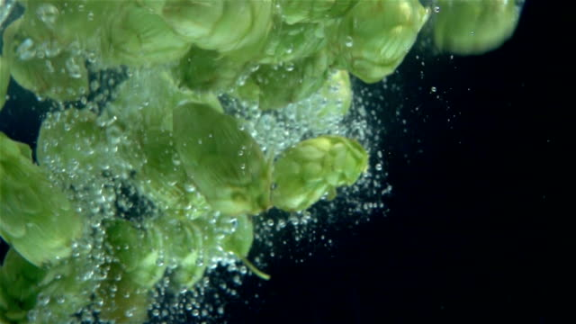 two videos of hops falling into water -real slow motion - pinecone stock videos & royalty-free footage