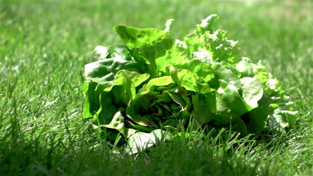 two videos of lettuce falling on the grass-real slow motion - textile patch stock videos & royalty-free footage