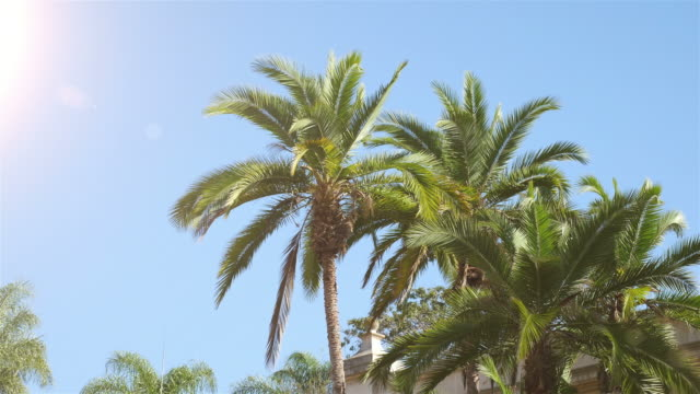 two videos of palm tree in 4k - palm leaf stock videos & royalty-free footage