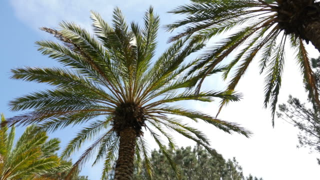 two videos of palm tree street in 4k - blue convertible stock videos & royalty-free footage