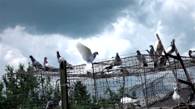 two videos of pigeons in real slow motion - loft stock videos and b-roll footage