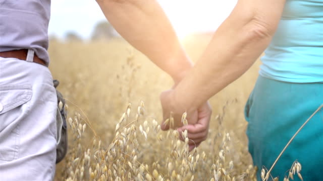 two videos of senior couple walking in oat field-slow motion - morbidezza video stock e b–roll
