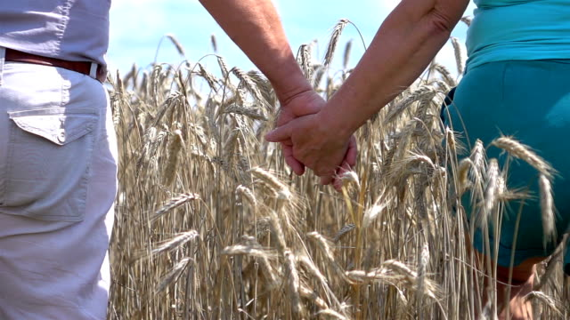 two videos of senior couple walking in wheat field-slow motion - morbidezza video stock e b–roll