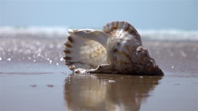Two videos of shells by the ocean-real slow motion
