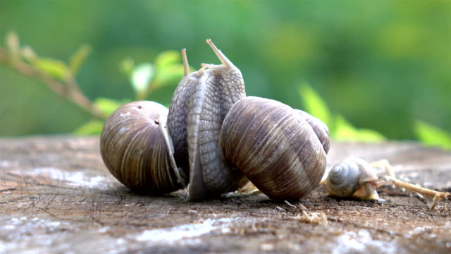 two videos of snails couple in love in 4k - animal antenna stock videos & royalty-free footage