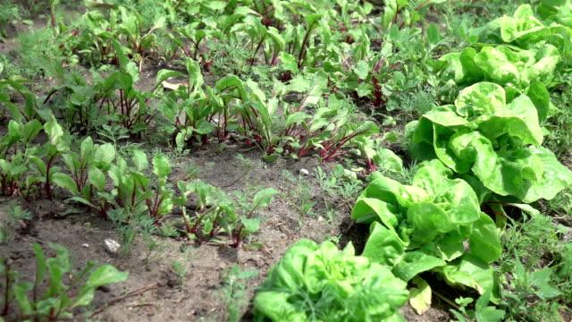 Twee video's voor plantaardige plot in echte Slowmotion