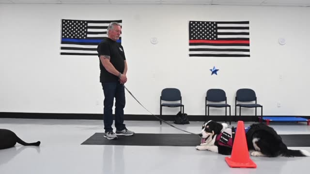 NY: Dogs trained to offer support to troubled US veterans