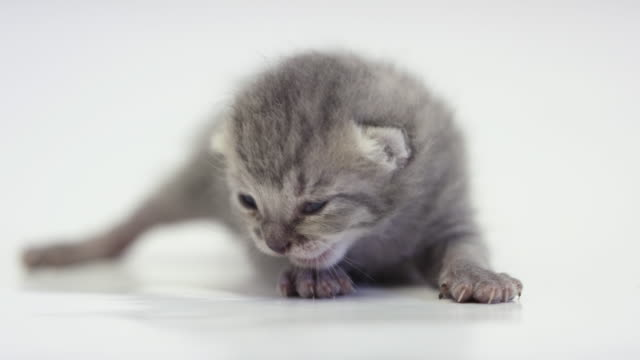 two week old kitten - visual impairment stock videos & royalty-free footage